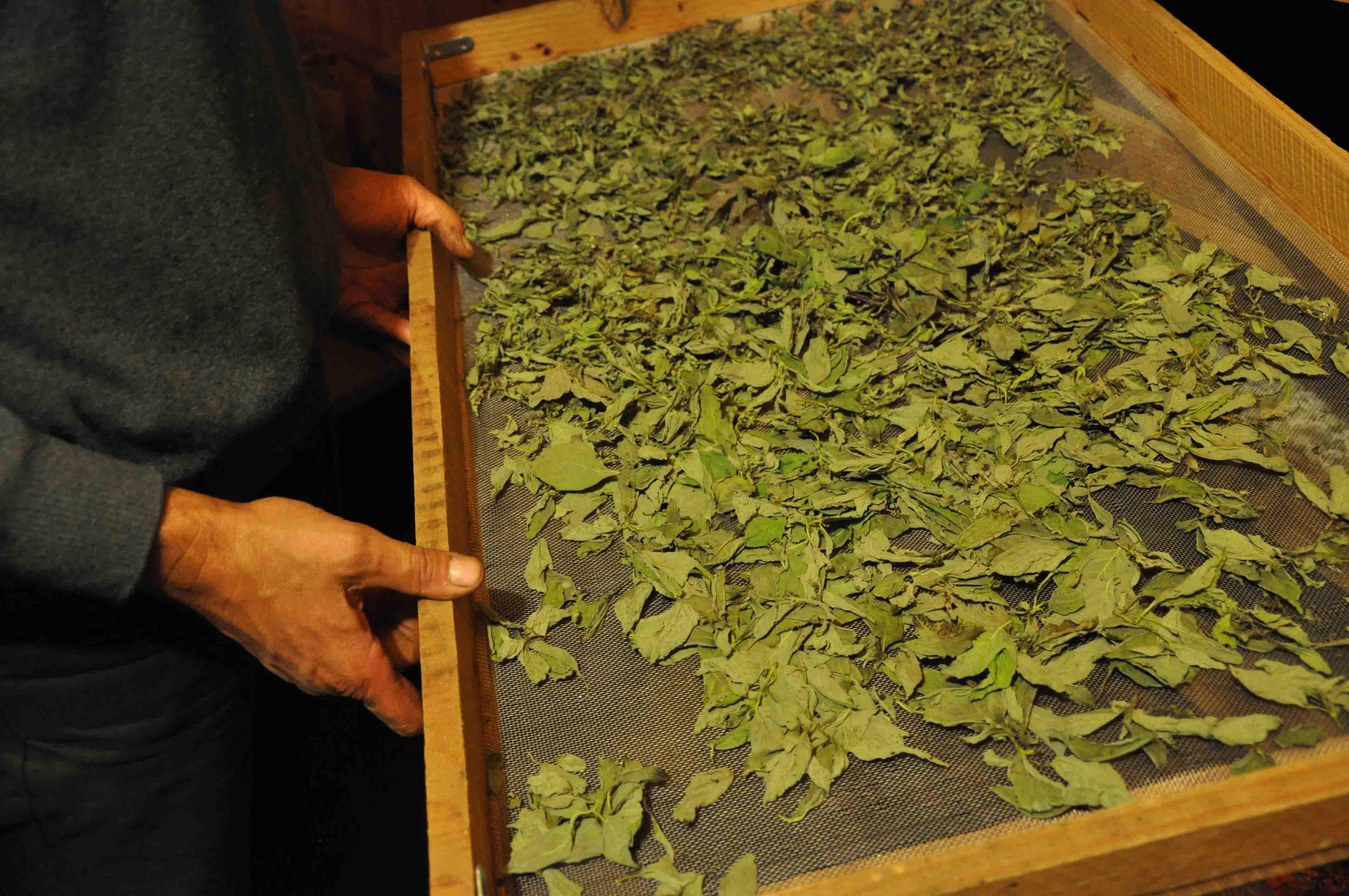 Dominique Lepage Cultiver Et Utiliser Les Plantes Aromatiques Et M Dicinales Savoir Faire Co